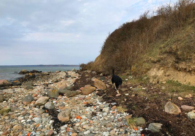 Gå tur i natur med hund Marina Aagaard blog
