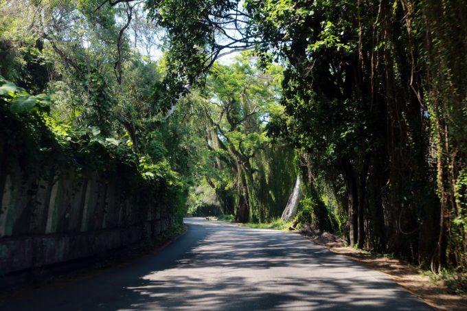 Cuba_Havana_parque_bosque_Marina_Aagaard_blog_travel_rejse