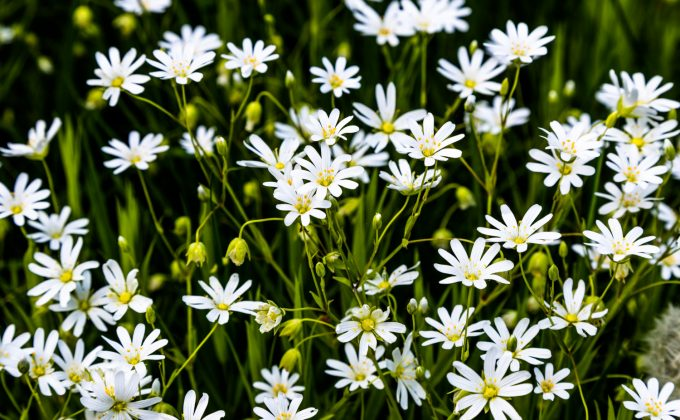 De Vilde Blomsters Dag Natur Marina Aagaard blog