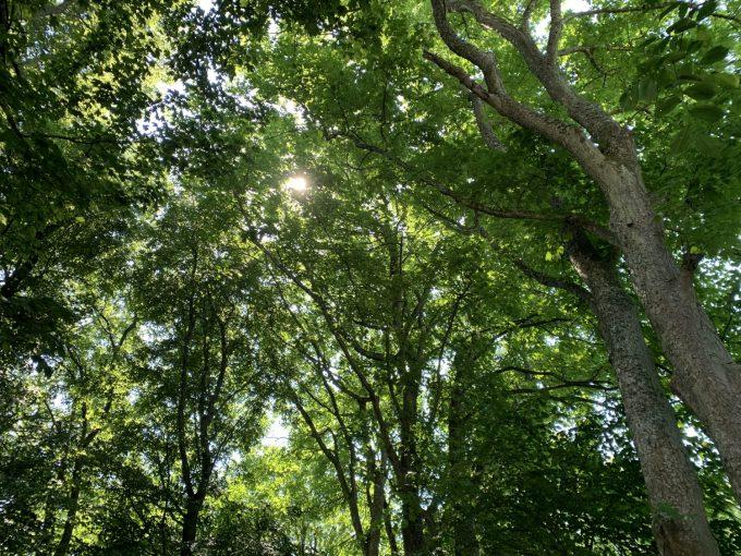 Mikroeventyr i vores natur Marina Aagaard blog travel rejse foto