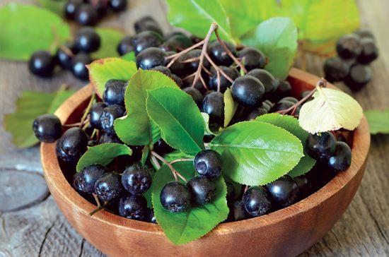 Bowl-of-Aronia-Berries