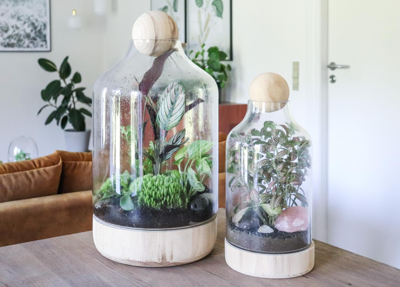 Terrarium, plante terrarium, terrarium af træ og glas, fittonia i glas