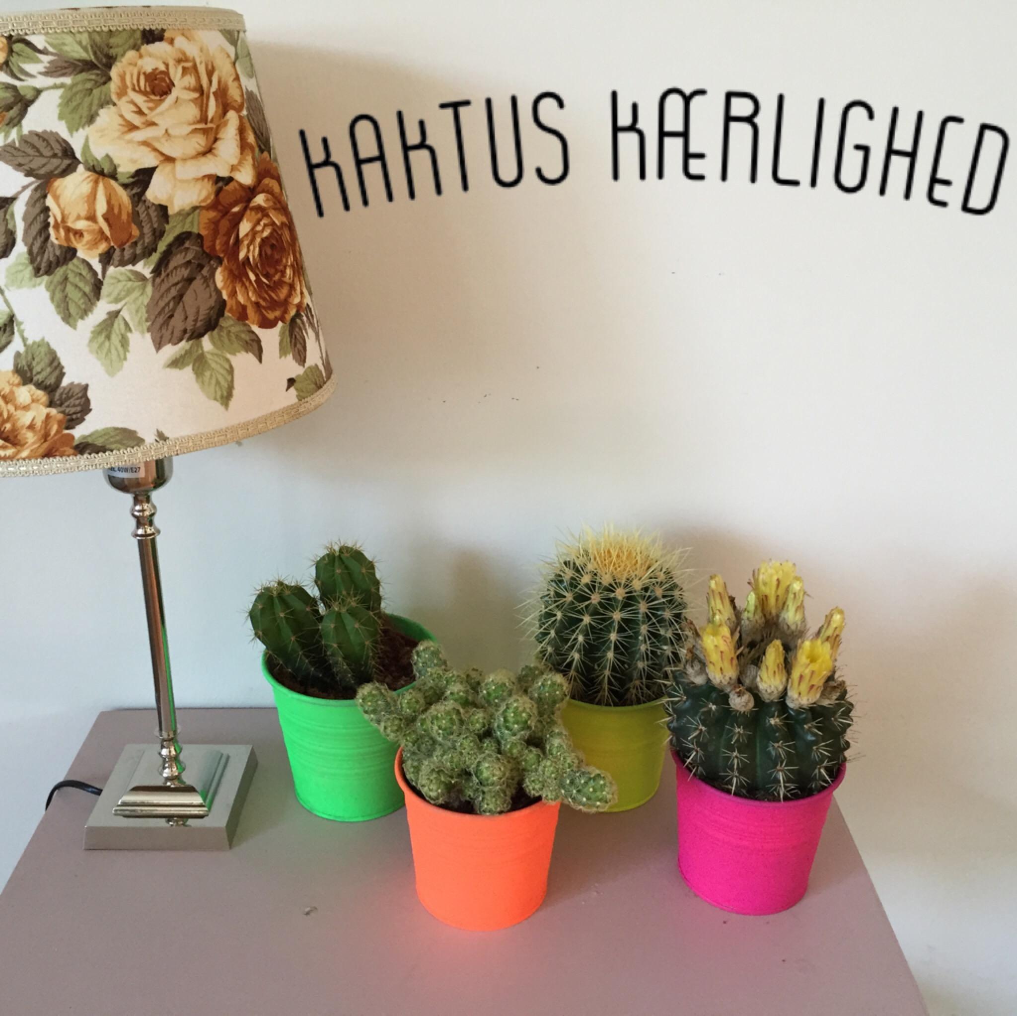 kaktus kærlighed