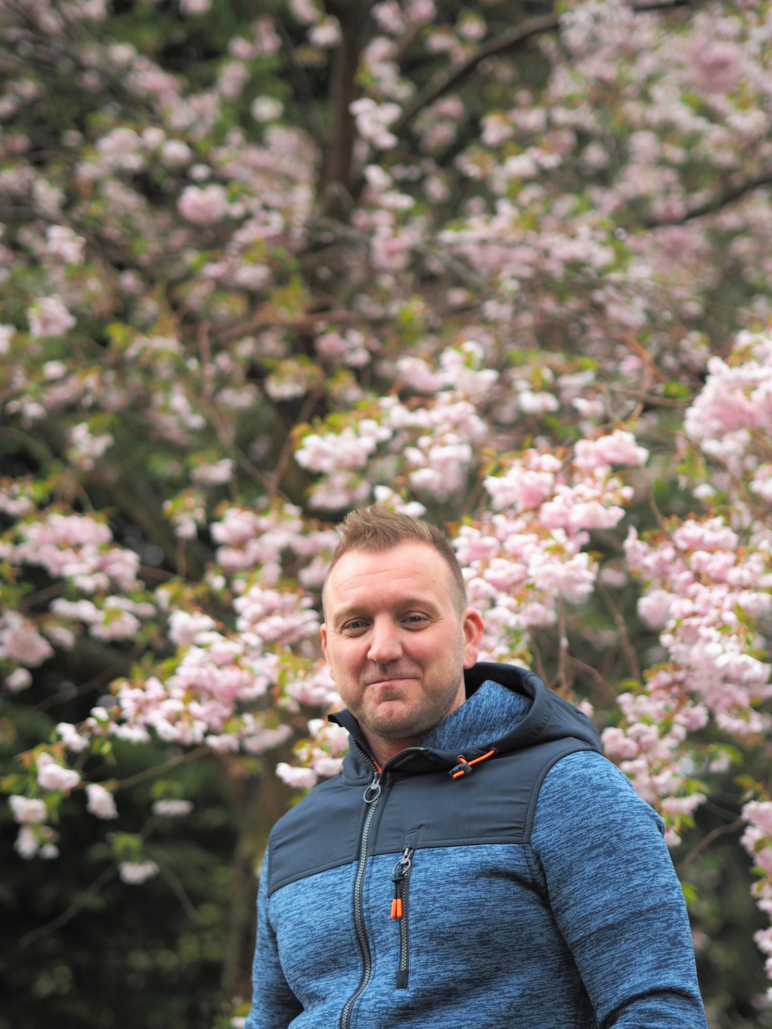 Kirsebærtræer på Bispebjerg Kirkegård