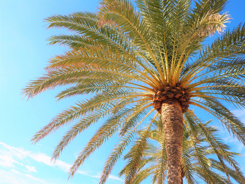 Venindetur til Mallorca