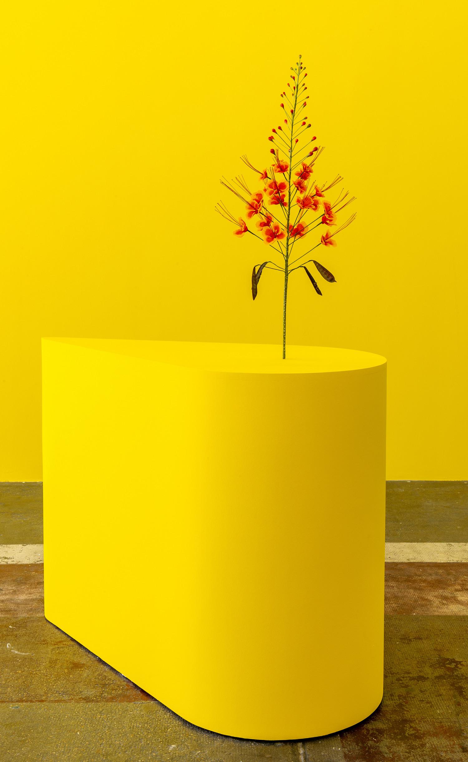 Blomsten i Kunsten. Kapwani Kiwanga, The Marias, 2020. Courtesy Centre d'art contemporaine d'Ivry – le Crédac, kunstneren og Galerie Tanja Wagner, Berlin. Foto: Marc Domage