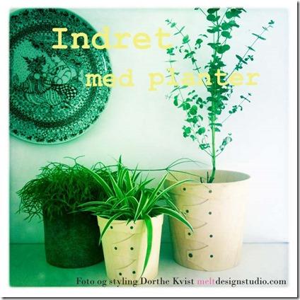 Indret med planter Foto og styling Dorthe Kvist