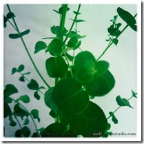 Indret med planter Foto Dorthe Kvist 30
