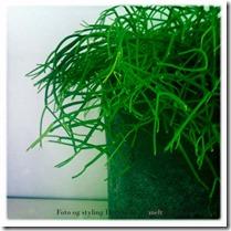 Indret med planter Foto Dorthe Kvist 31