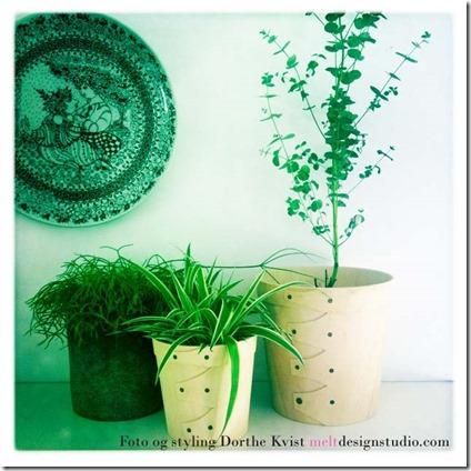 Indret med planter 1 Foto Dorthe Kvist