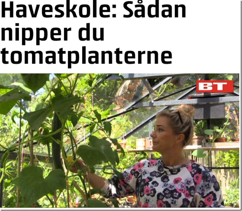 Kvistens haveskole sådan kniber du tomaterne  Dorthe Kvist Meltdesignstudio b