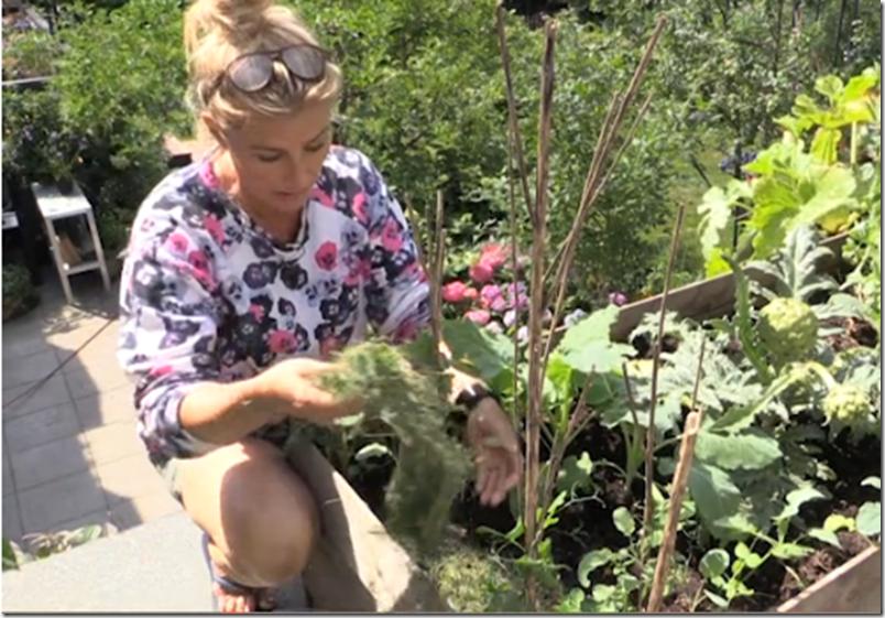 Kvistens haveskole sådan holder du jorden fugtig Dorthe Kvist Meltdesignstudio a