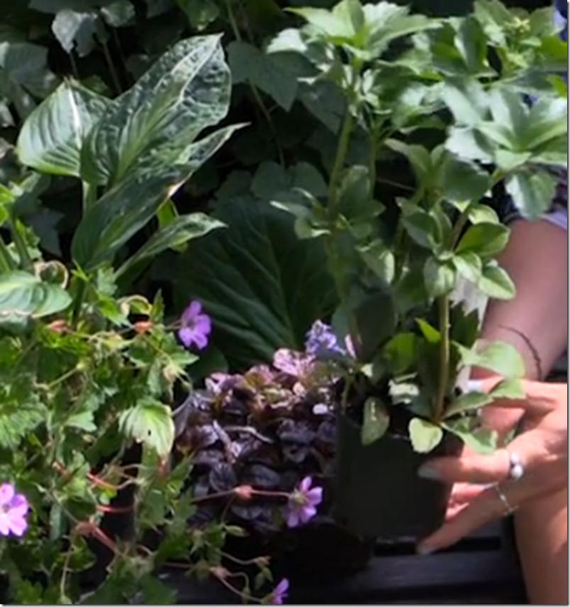 Kvistens haveskole Slip af med ukrudtet på en smuk måde Dorthe Kvist Meltdesignstudio 3
