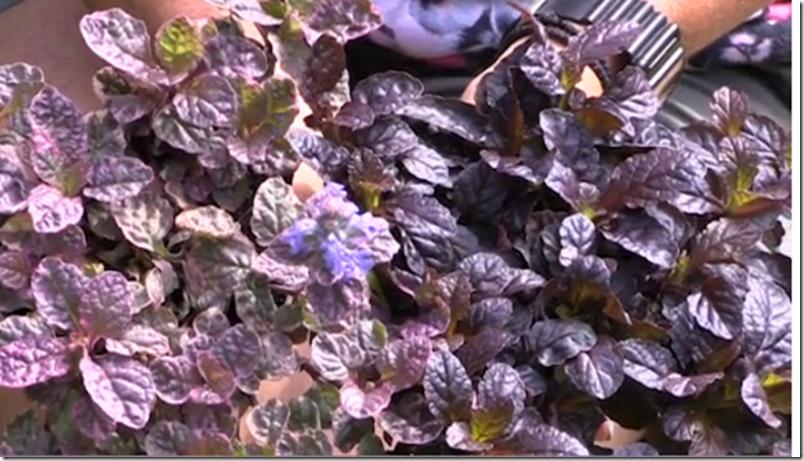 Kvistens haveskole Slip af med ukrudtet på en smuk måde Dorthe Kvist Meltdesignstudio 2