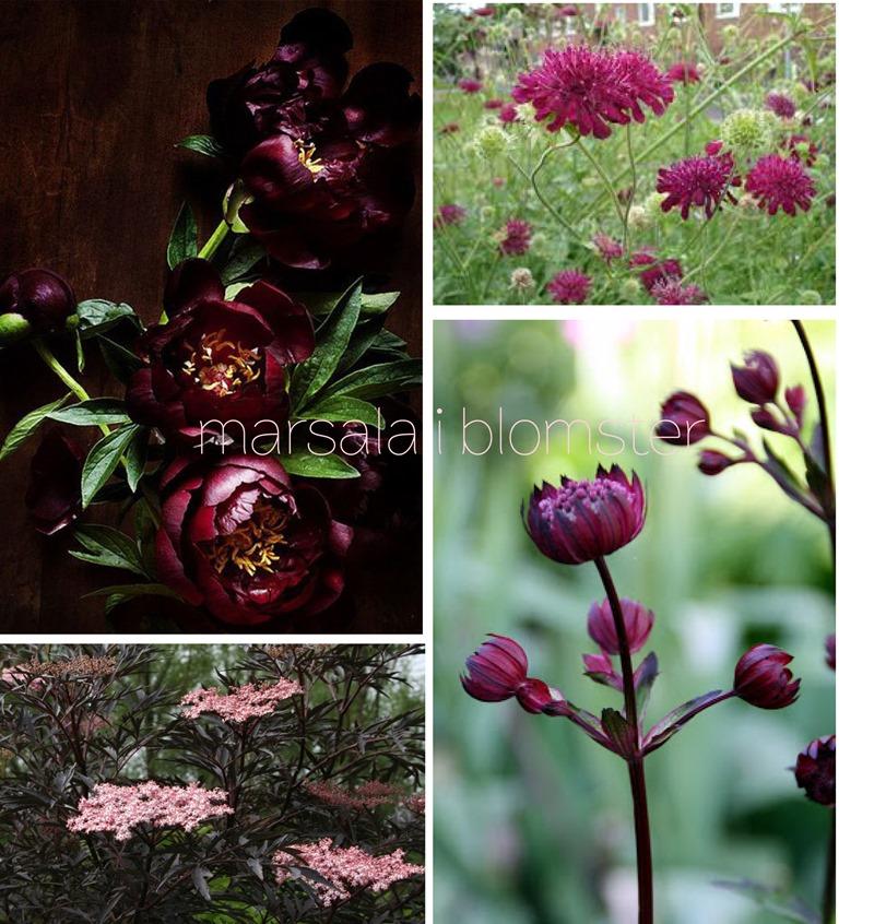 Marsala årets farve Dorthe Kvist Meltdesignstudio Sambucus Black lace peony Knautia macedonic astrantia major