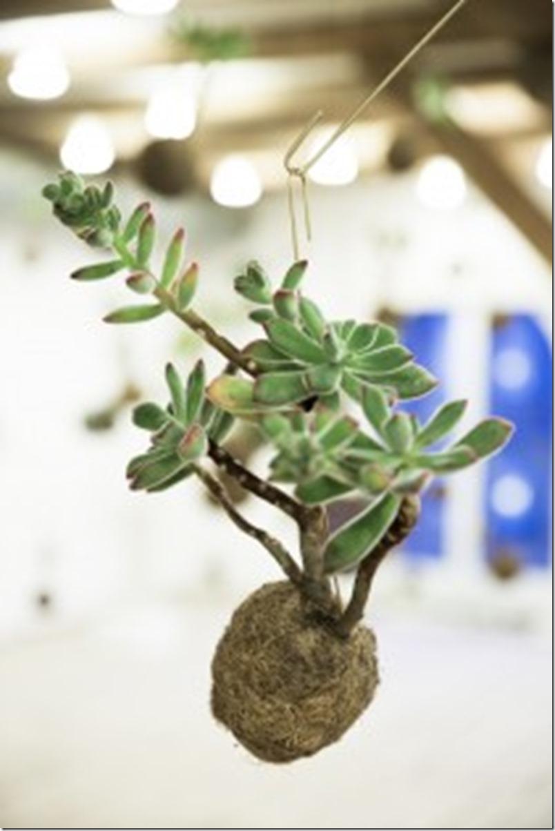 Planteplaneter Kaja Sofie Skytte Dorthe Kvist Meltdesignstudio (5)