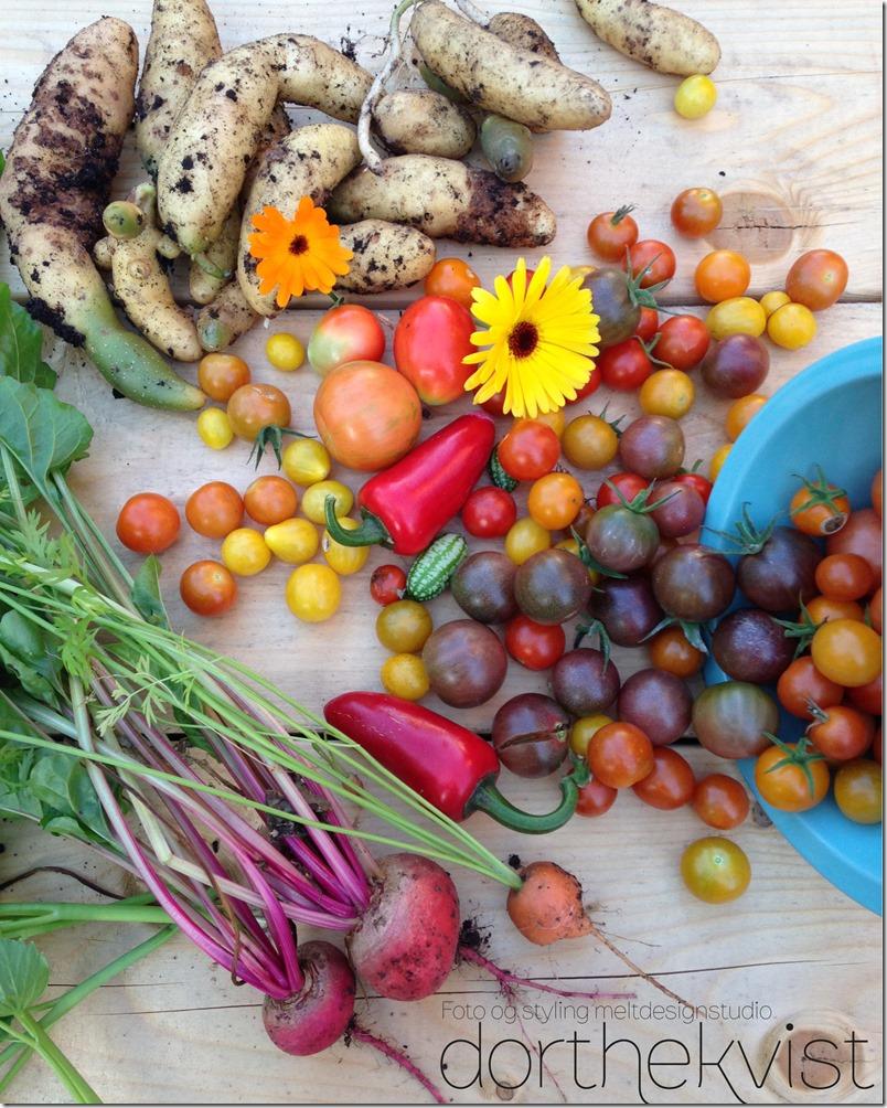 Grow organic dyrk økologisk hjemmedyrk Foto og styling Dorteh Kvist Meltdesignstudio