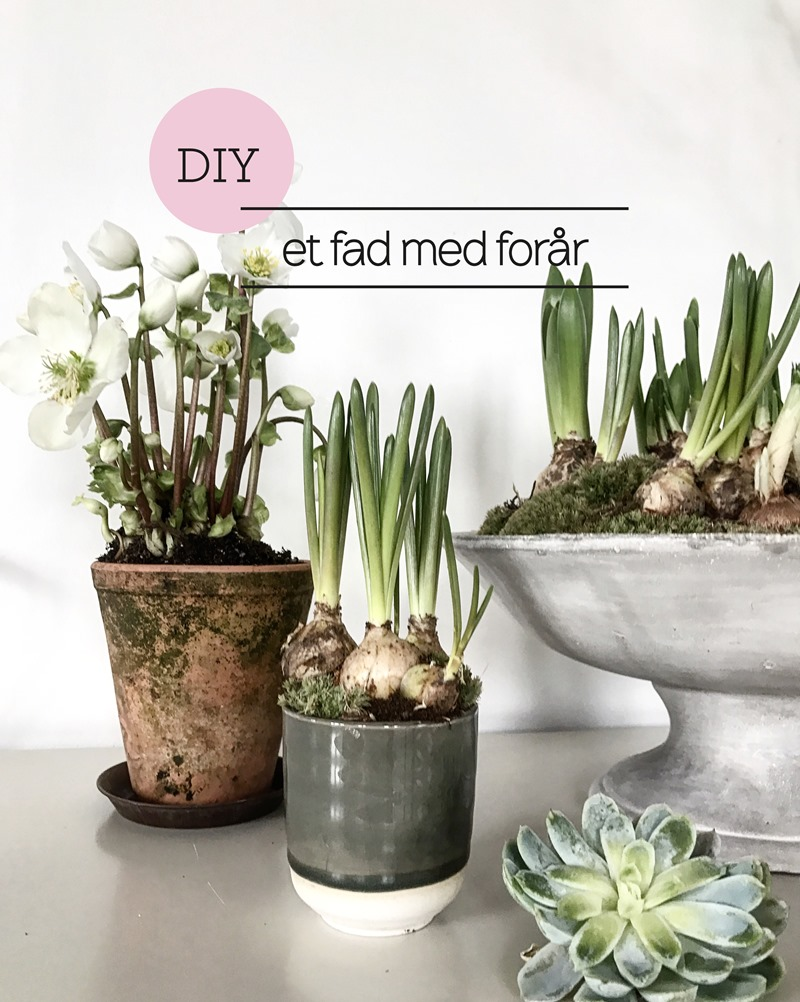 DIY Et fad med forår Foto og styling Dorthe Kvist Meltdesignstudio