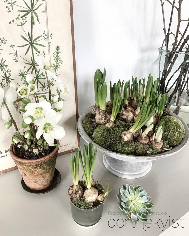 DIY Forår på et fad Foto og styling Dorthe Kvist Meltdesignstudio 1