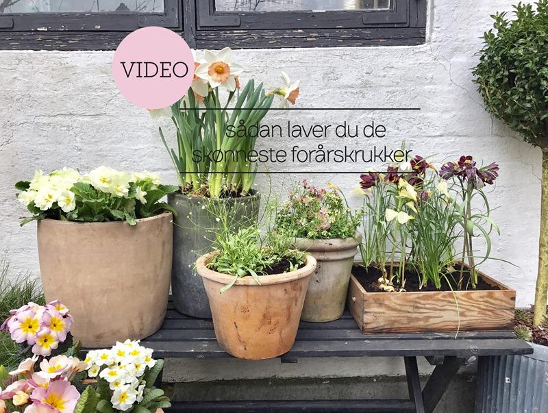 Havetips Sådan laver du de skønneste forårskrukker Dorthe Kvist Meltdesignstudio 4