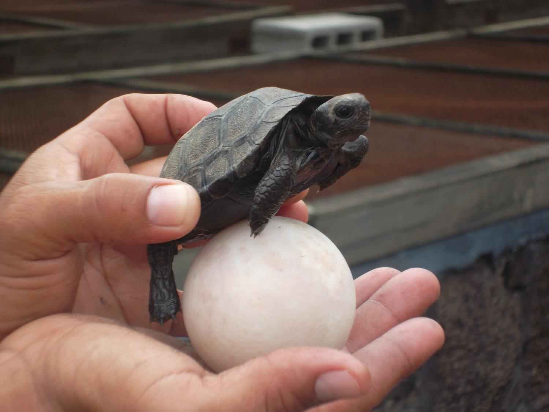 Baby turtle + egg