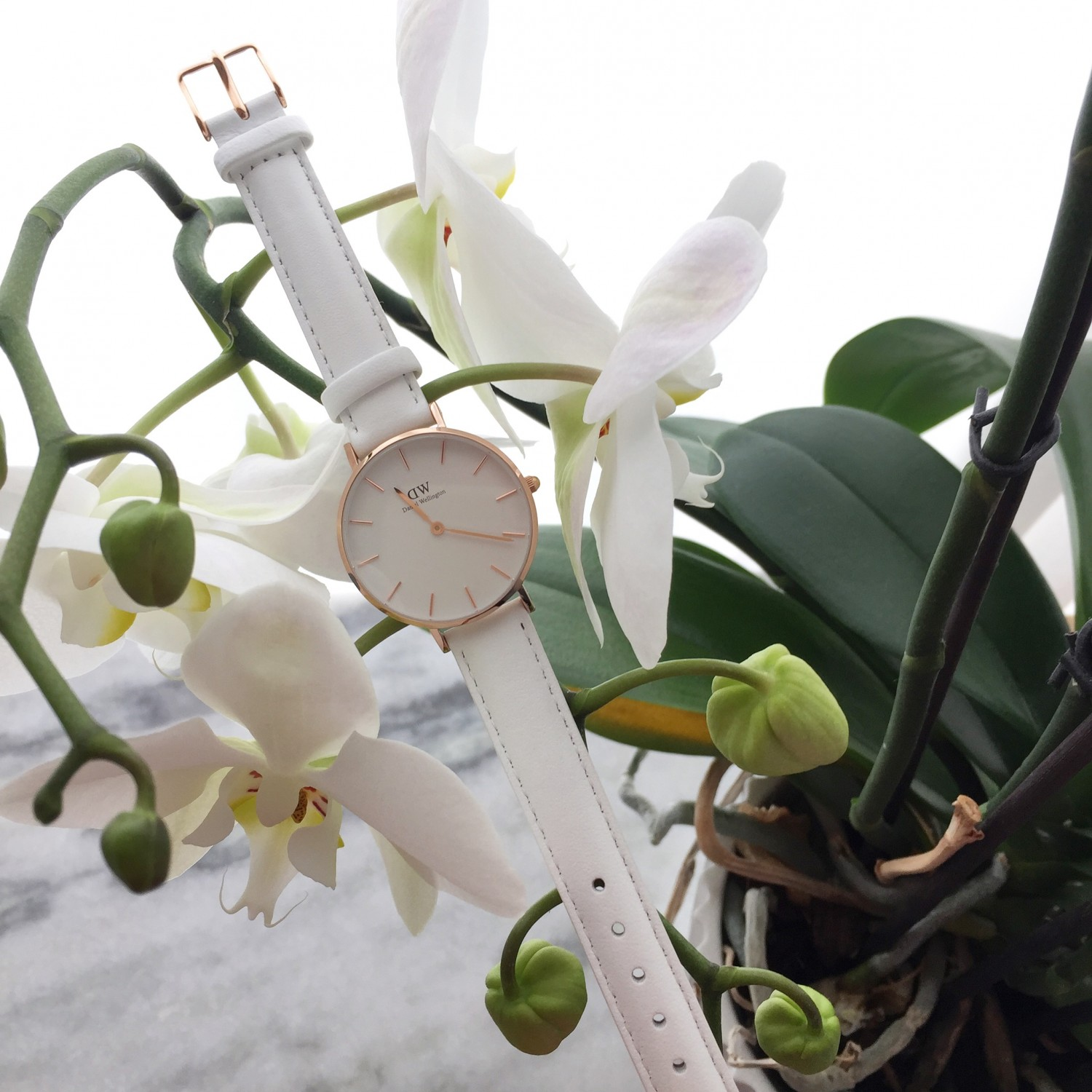 Daniel wellington white