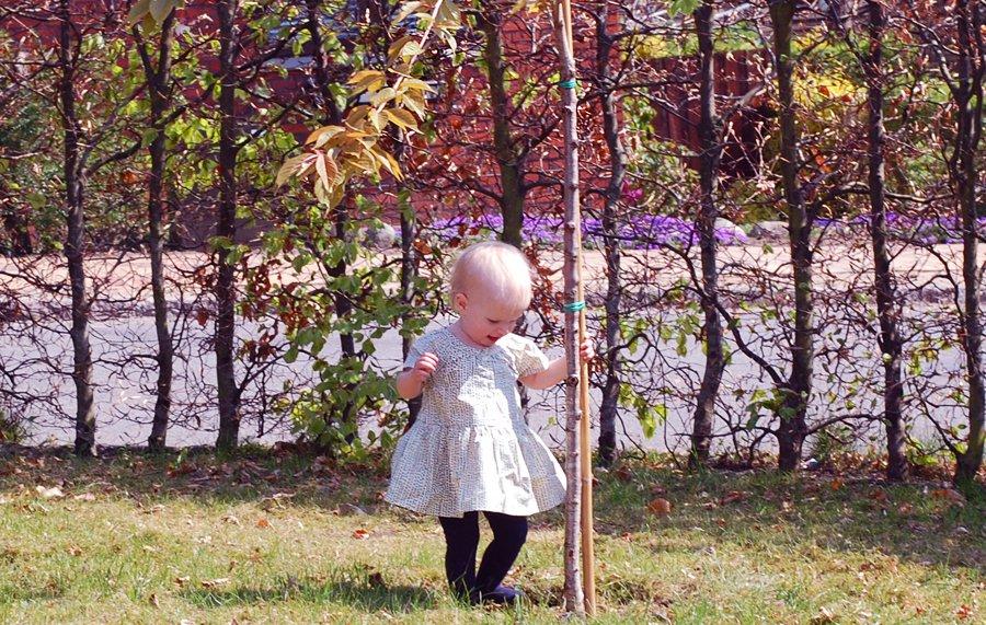 En ny tradition: Det japanske kirsebærtræ