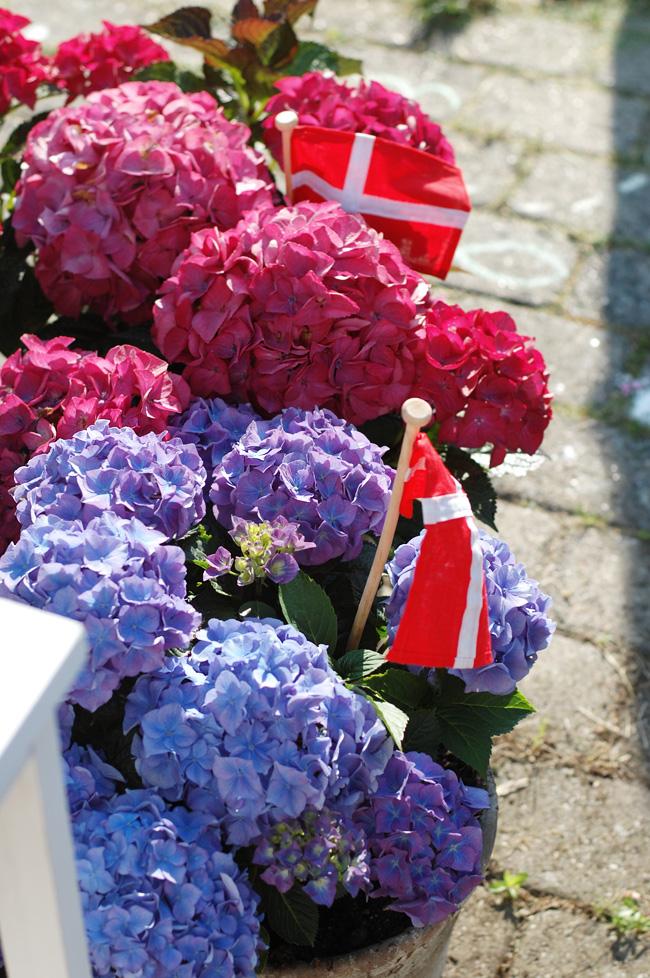 photo havefest-ikea-fodselsdag-missjeanett-blogger-hortensia-blue-blaa-pink_zpsitxl3lin.jpg