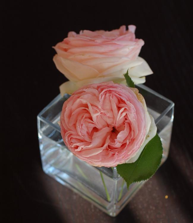 photo roser-lyserode-roses-pink-lyse-kravle-slyngroser-danmark-dufter-meget-godt-missjeanett_zps4dbthnde.jpg