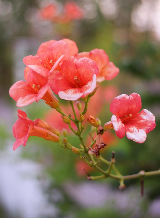 photo korfu-corfu-flowers-blomster-fauna-planter-missjeanett-blogger-sommerferie_zps9s9wjypo.jpg