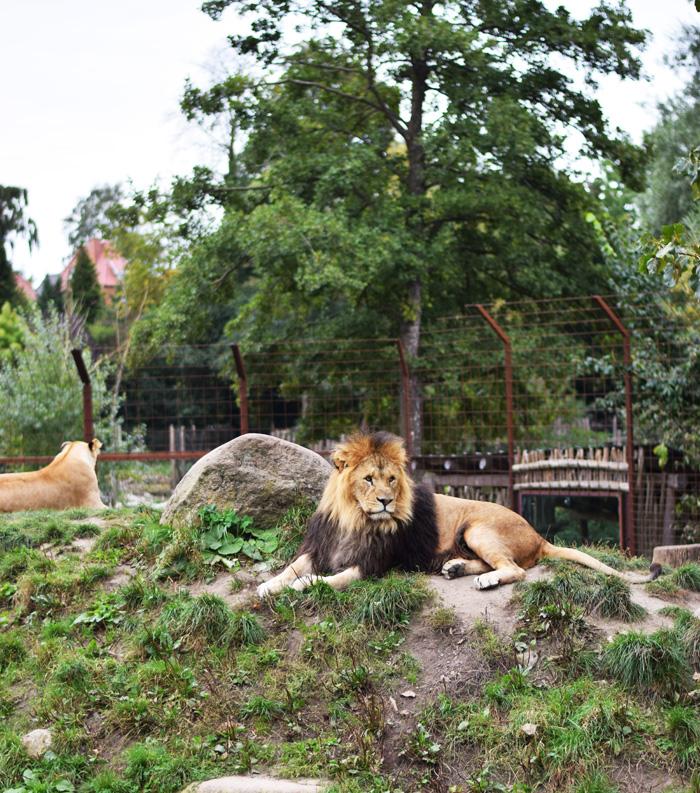 min-weekend-dab-middag-i-kobenhavn-og-zoo9