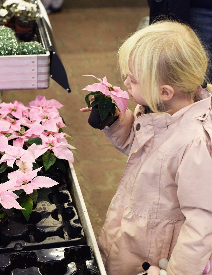plantorama-juleudstilling-juleudsmykning-lyserod-julestjerne-pink-missjeanett-blogger-fra-odense
