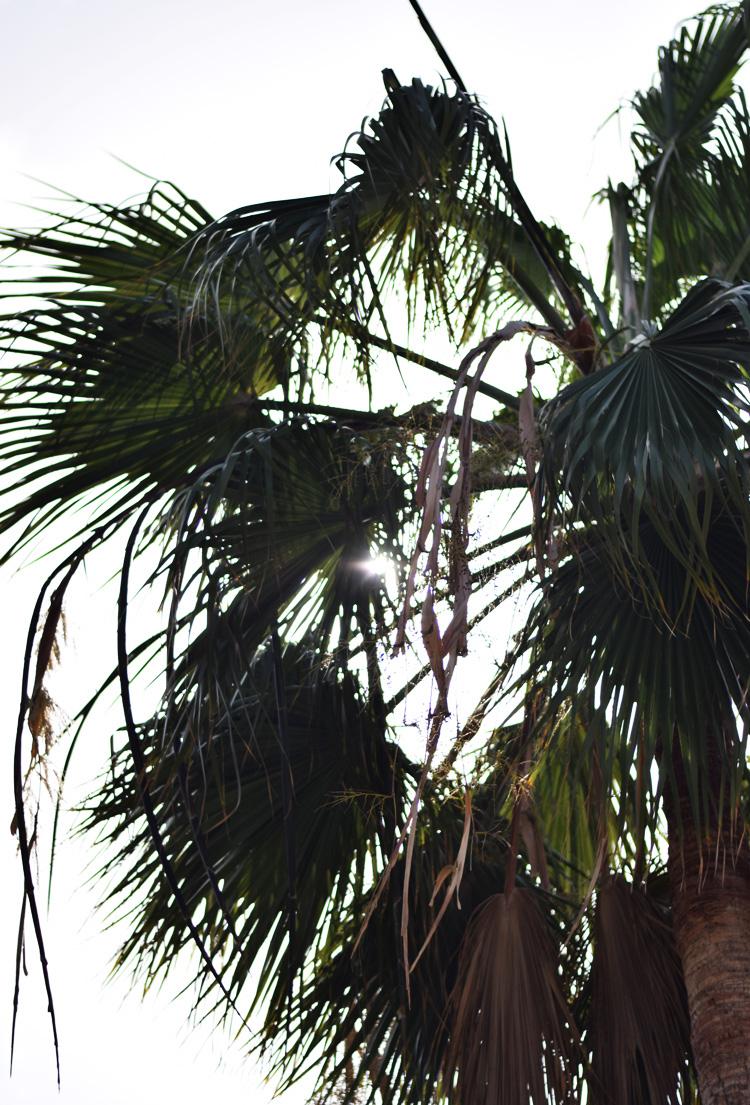 fuerteventura-corralejo-spain-de-kanariske-oer-canary-islands-palmer-missjeanett-blogger-iamtb