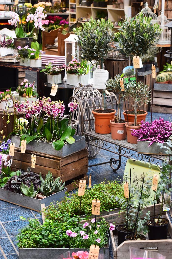 tarup-center-blomsterbutik-blomsterhandel-kaktus-missjeanett-blogger-oliventrae-sukkulenter