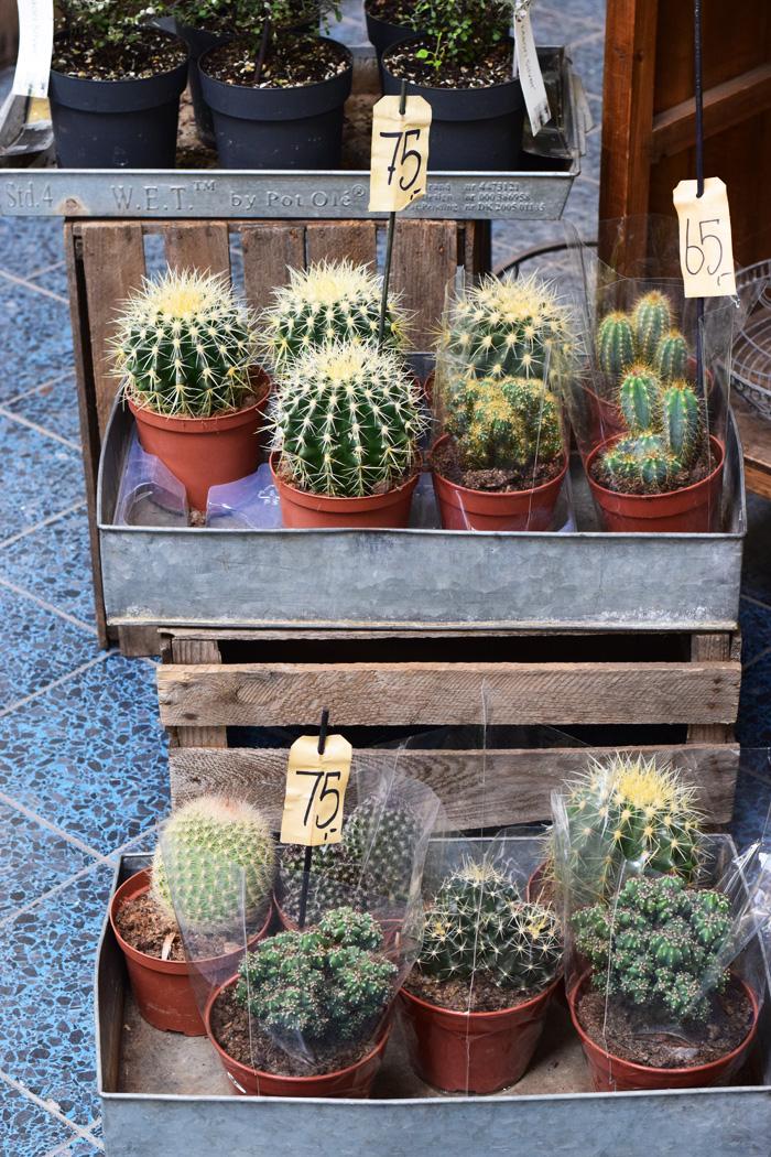 tarup-center-blomsterbutik-blomsterhandel-kaktus-missjeanett-blogger