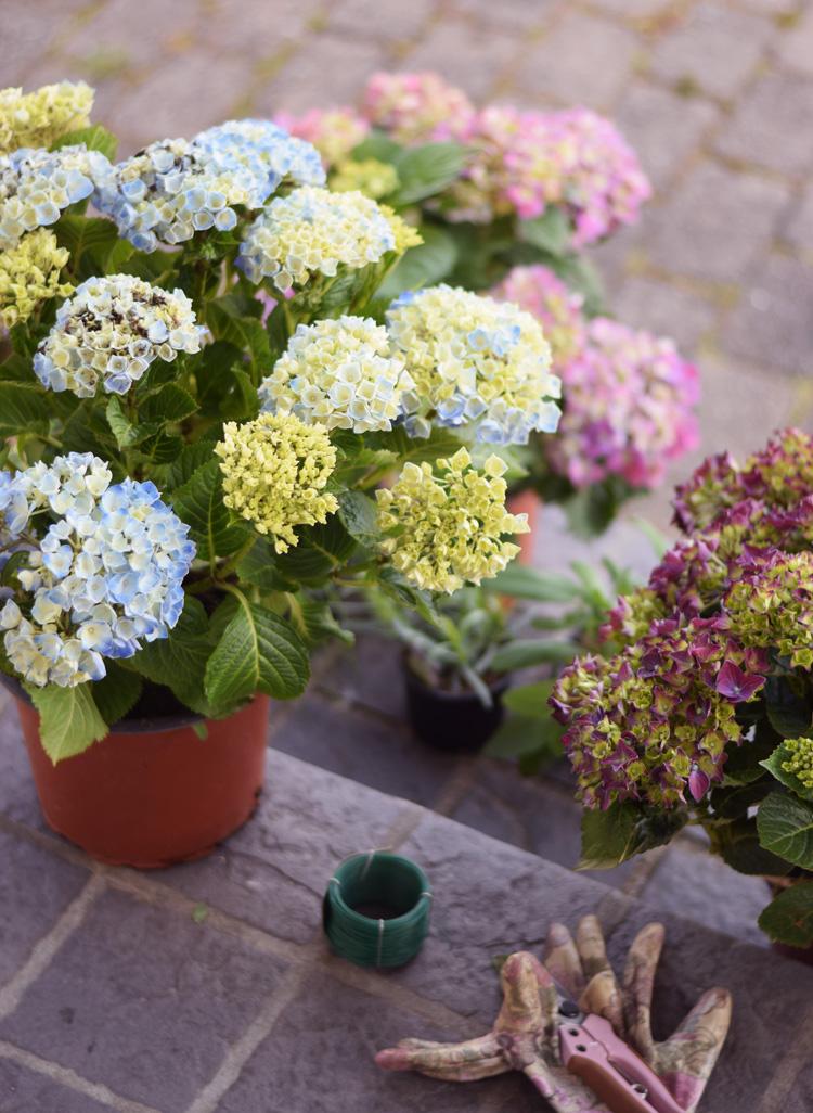 hortensia-garden-girl-planter-plantorama-missjeanett-min-weekend-handsker