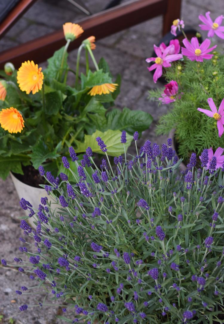 sommer-blomster-krukker