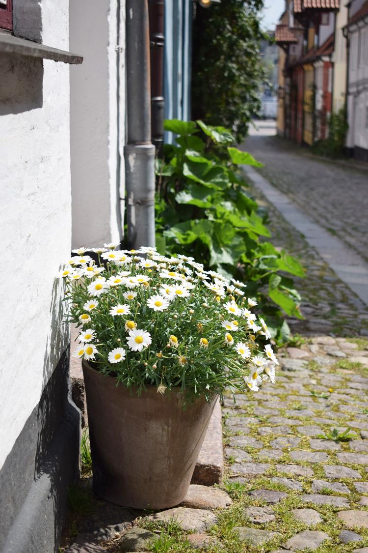 Flensborg guide tips - Oluf Samson gang Flensburg