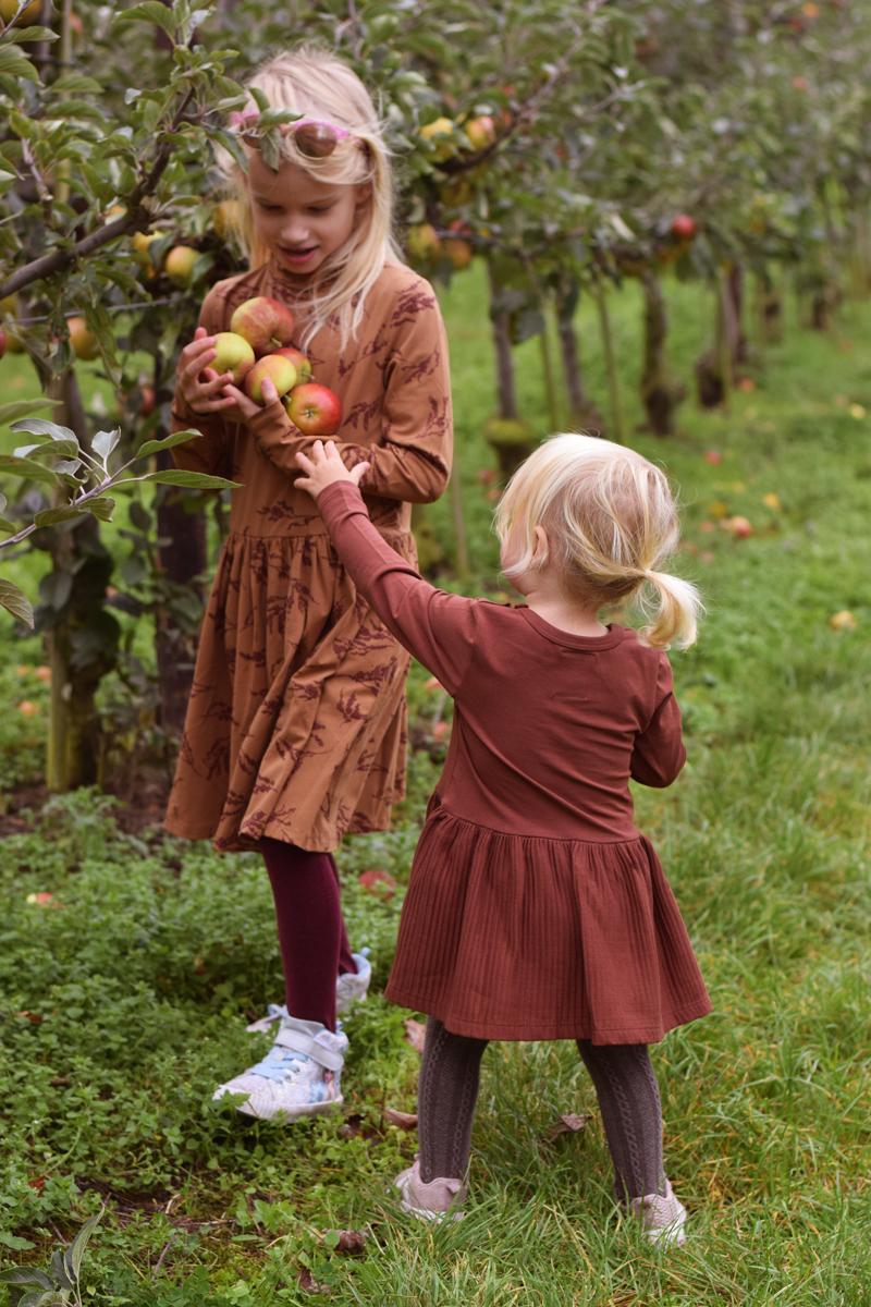 Nybro frugtplantage selv pluk æbler