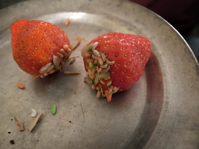 jordbær med fennikelfrø
