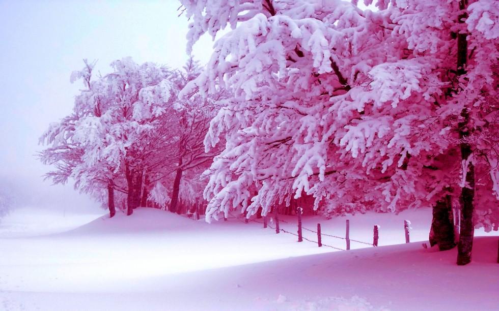 winter-trees-42216
