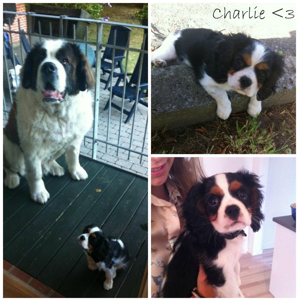 Charlie2013