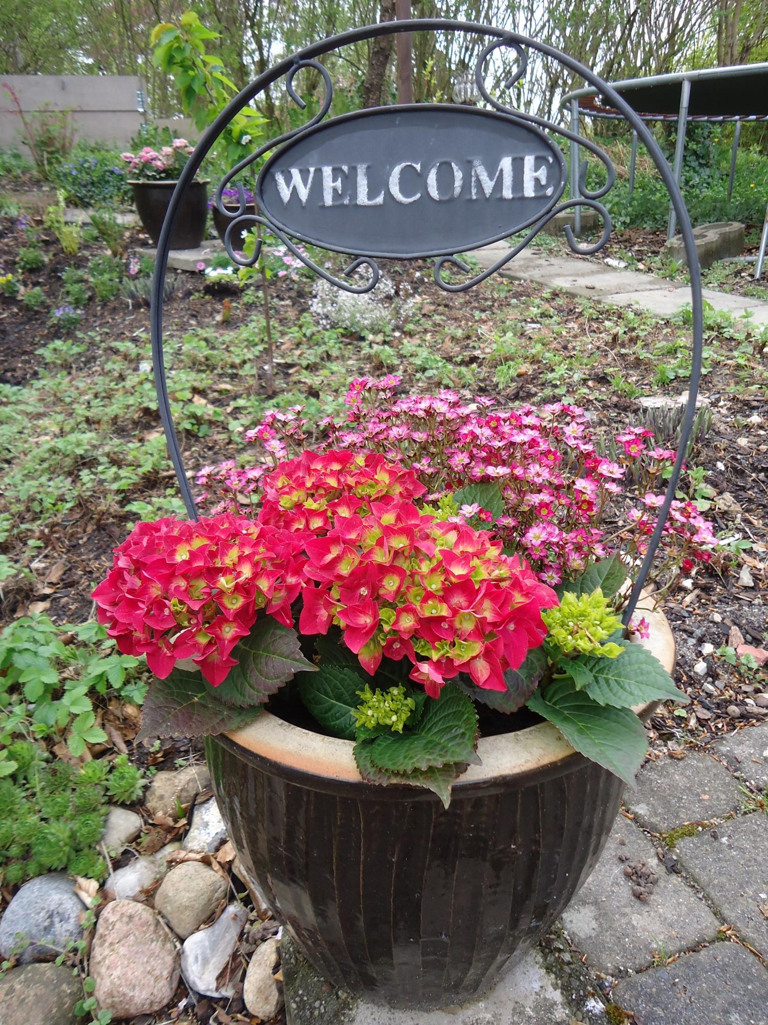 Meget symbolsk med teksten - på skiltet i blomsterkrukken  HUSK byd andre ind