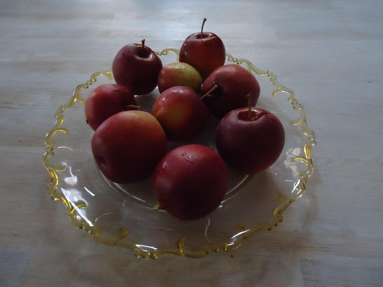 Æbler af egen avl!!!