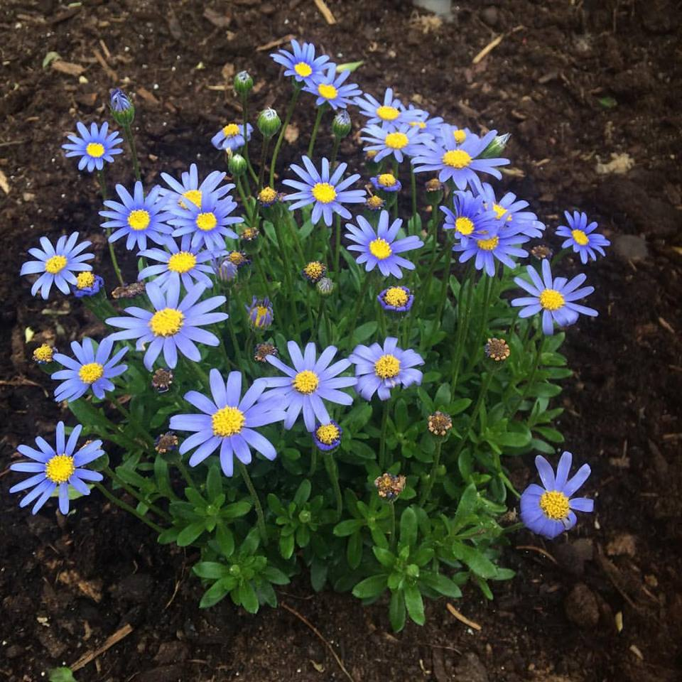 Man bliver lidt glad il åget over disse skønne blomster
