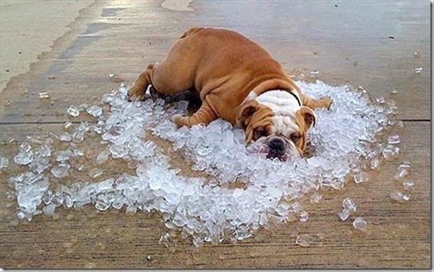 melting summer hot
