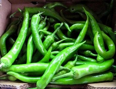 turksih-siviri-biber-pepper-2012_MED 58