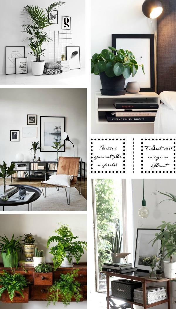 planter-i-hjemmet2