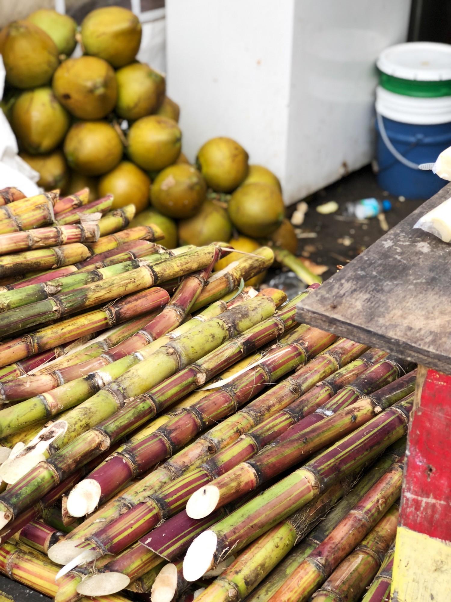 Cruising med Royal Caribbean Jamaica Sukkerrør