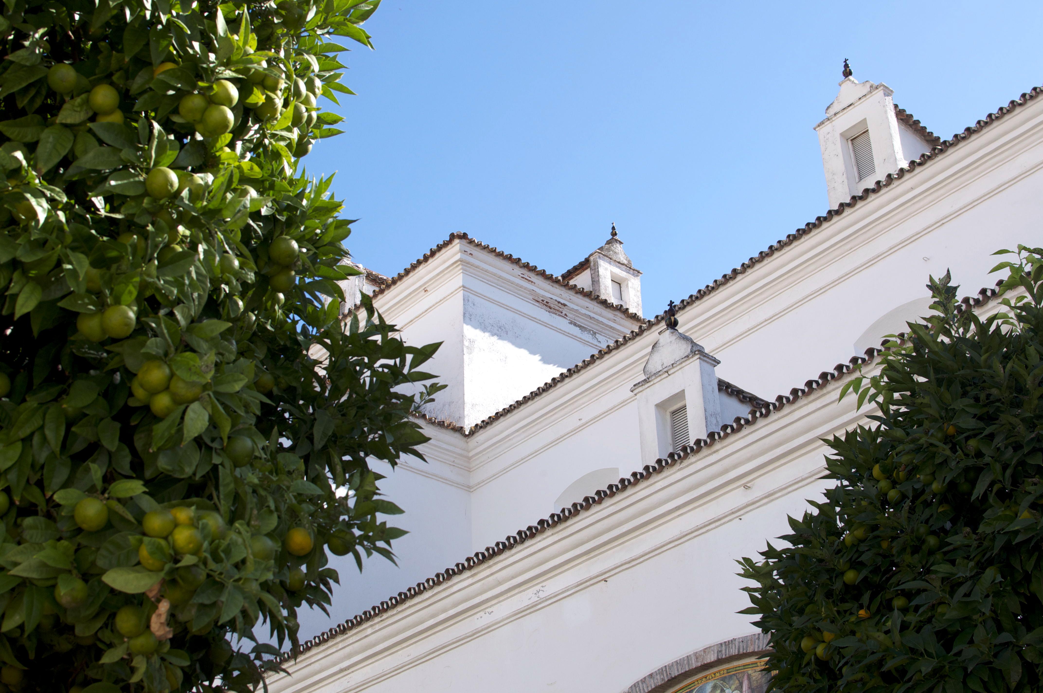 Marbella V